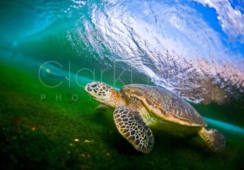 Clark Little Photography - Image Gallery _ Online Store