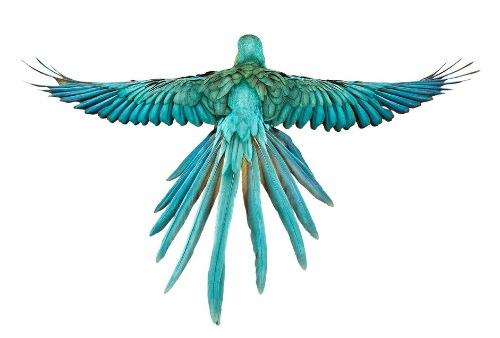 Desde 2007, Andrew Zuckerman já fotografou mais de 500 espécies diferentes de pássaros e todas essas fotos podem ser vistas no livro Bird.