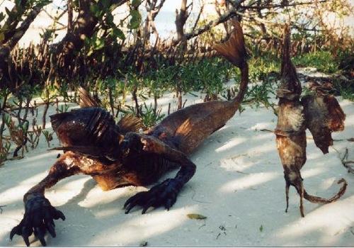 Juan Cabana é conhecido por fabricar e vender falsas múmias de sereias. No site dele você pode ver vários exemplos do que ele vende. Acho que eles dariam um ótimo presente do Dia das Mães.
