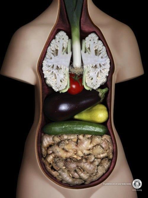 International Vegetarian Union