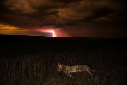 Wildlife Photographer of the Year 2012