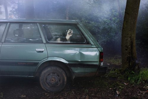 dogs-in-cars-01