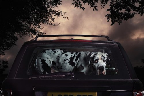 dogs-in-cars-04