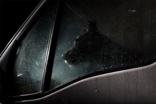 dogs-in-cars-05