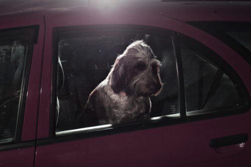 dogs-in-cars-08