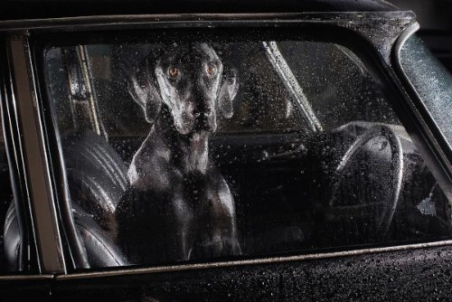dogs-in-cars-09