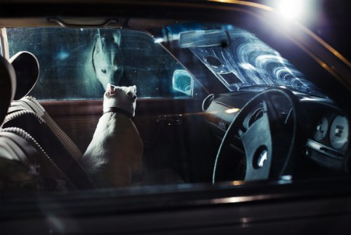 dogs-in-cars-15