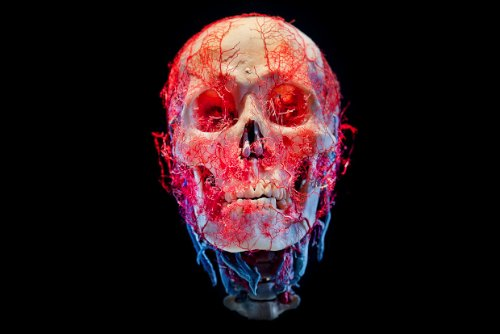 Bodies&Skulls_theNewCruelty_01