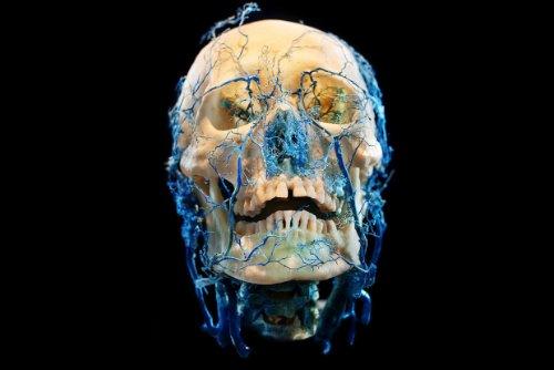 Bodies&Skulls_theNewCruelty_02