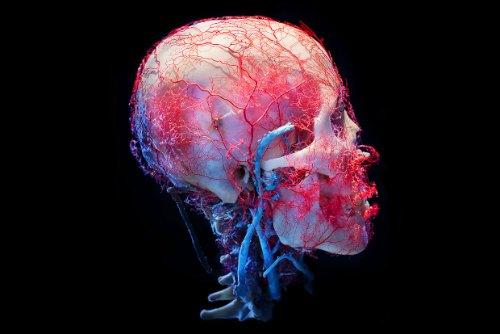 Bodies&Skulls_theNewCruelty_05