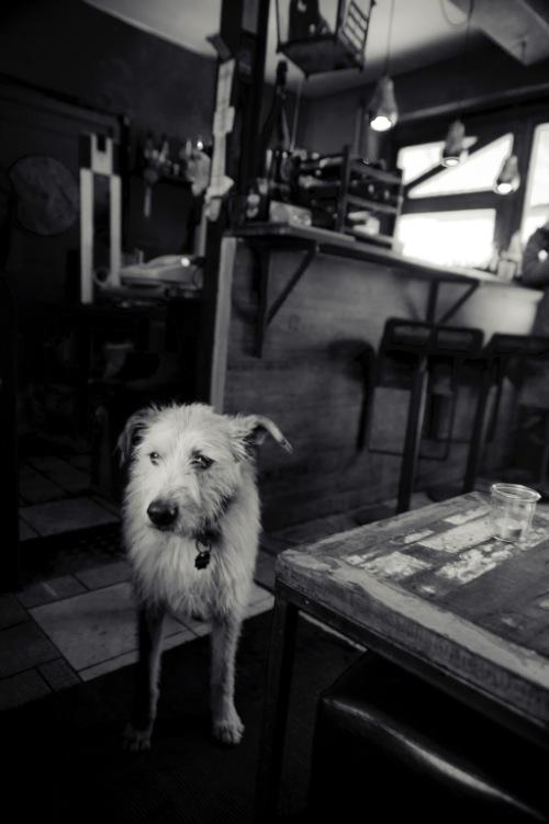 Acompanho o trabalho de fotografia da Marcela Faé, fotógrafa brasileira residente em Berlin, desde 2008 e gosto de ver como seu trabalho evoluiu através dos anos. É fácil ver essa evolução já que ela é minha esposa mas creio que é bem fácil para vocês observarem essa evolução.