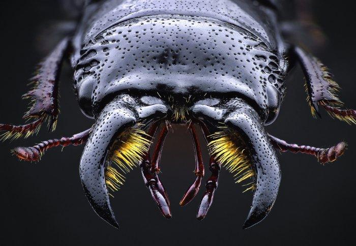 Se você não é fã de insetos, esse post não é para você. Isso acontece por que as fotos de John Hallmén vão te colocar muito perto desses insetos. Talvez, perto demais já que você nunca viu esses animais dessa forma.