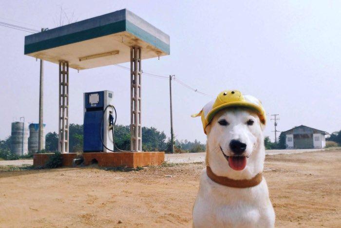 Sorasart Wisetsin encontrou Gluta nas ruas da Tailândia onde ela costumava viver antes de ser adotada. Ela não estava em um bom estado de saúde mas acabou de tornando o cachorro mais feliz do mundo como você pode ver nas fotos abaixo. width=