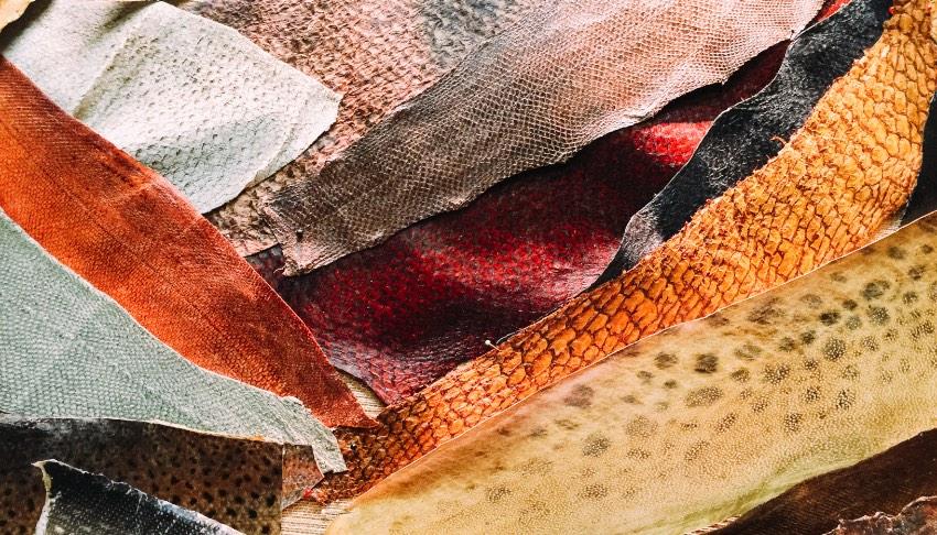 Galateia Couro de Peixe 03
