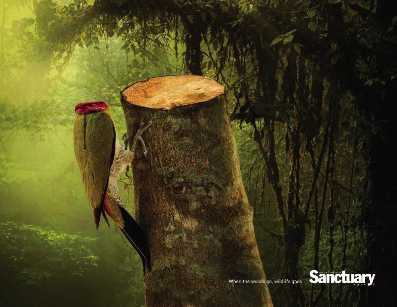 Preciso dizer, antes de tudo, que as imagens abaixo, criadas para Sanctuary Asia, são bem fortes e elas foram feitas dessa forma para mostrar a importância da mensagem. Afinal, é isso que acontece todos os dias nas florestas desmatadas do mundo.
