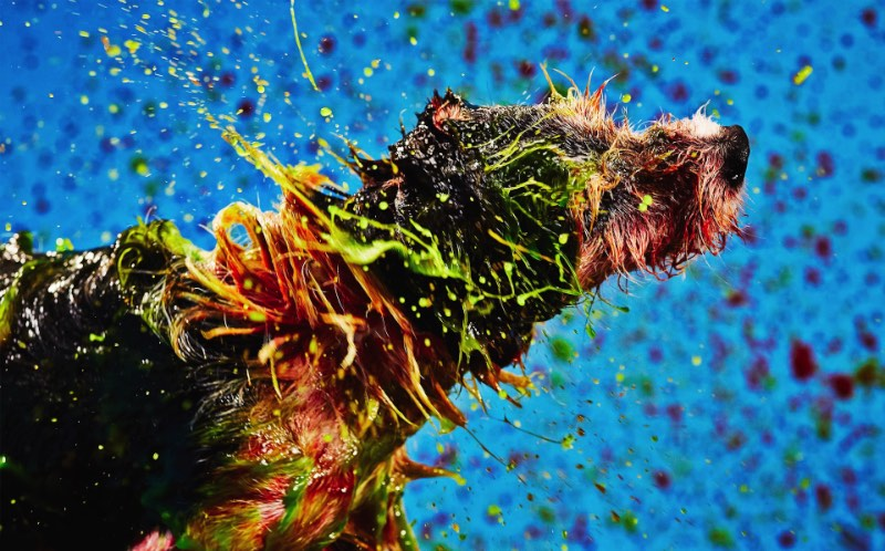 Todo cachorro é um artista. Apoie o movimento artístico Canismo.
