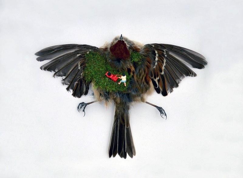 A artista canadense Jesse Bromm cria estranhas e subversivas paisagens em miniatura que usam uma combinação de pedaços de animais, vidro e objetos que ela encontra por ai. Através da mistura desses elementos, ela tenta criar um diálogo entre como vemos a realidade e o que realmente existe por trás de tudo isso.