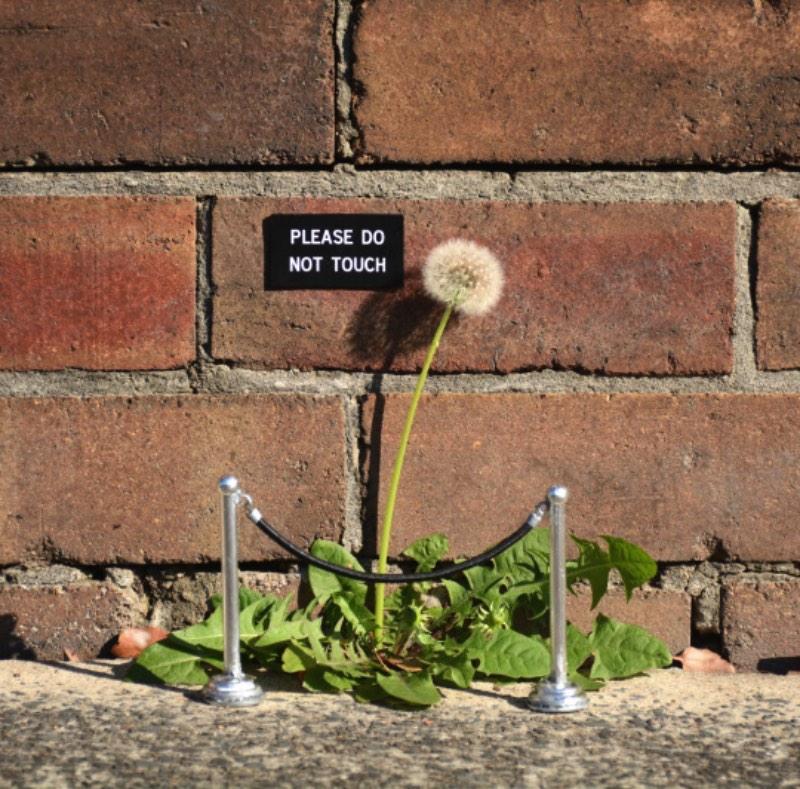 Michael Pederson é um artista australiano que cria uma série de obras de arte pelas ruas de Sydney. Essas obras são feitas de objetos do dia a dia e, normalmente, vem com uma mensagem que vá impactar os residentes da cidade de um jeito ou de outro. Particularmente, adoramos as quase oficiais placas que ele espalha pelas ruas.