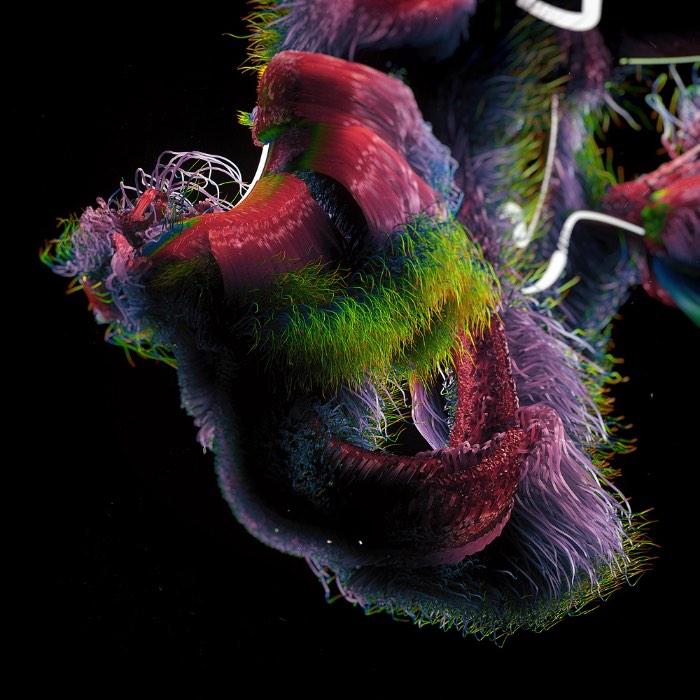 Growths é o nome desse projeto experimental do designer Ari Weinkle. Aqui ele resolveu explorar a elegância da caligrafia em Copperplate somada com algumas estranhas formações orgânicas. Abaixo você pode ver melhor o que eu estou querendo dizer.