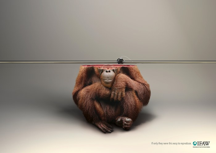Como parte de uma campanha internacional para a IFAW, o Fundo Internacional para o Bem Estar Animal, a Young & Rubicam de Paris criou uma campanha que mostra como é impossível substituir a vida selvagem e o quão irreversível esse processo de destruição da vida animal é.