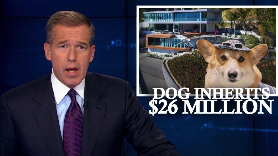 O que eu achei mais interessante nesse video do Ben Bacal é como ele resolveu usar da fofura de um cachorro para vender um imóvel de alto luxo em Los Angeles. Essa é uma ideia que eu nunca havia pensando mas que parece ser tão óbvio. Afinal, alguma forma de viralizar um video vendendo imóveis de alto luxo? Existe alguma forma de transformar a apresentação de um imóvel em algo interessante? Acredito que essas foram as perguntas que surgiram quando a ideia desse video estava sendo discutida.