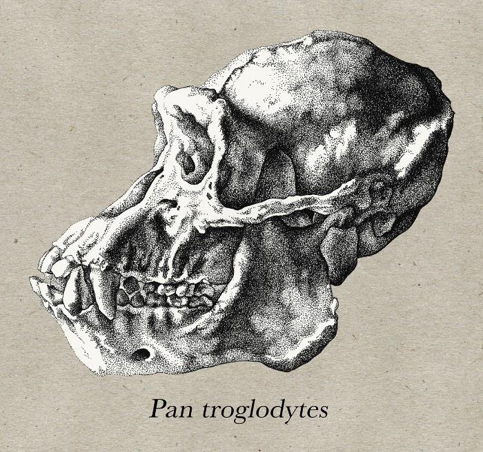 A ilustração de Katy Wiedemann explora o campo da anatomia, seja isso de animais, humanos ou pequenos insetos. E ela faz isso com uma maestria digna daqueles livros do passado que ainda usavam de ilustrações para mostrar como o corpo humano funciona.