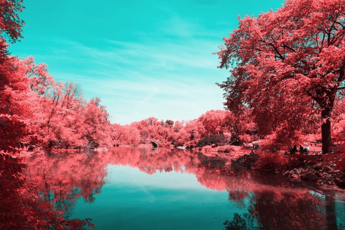Foi isso que Paolo Pettigiani fez nesse série de fotografias do Central Park em Nova Iorque. Ele usou de um filtro especial na frente das suas lentes para bloquear a luz visível e deixar apenas os outros espectros de luz visíveis. Dessa forma, as fotos que ele fez desse parque acabam mostrando plantas de um jeito bem estranho mas, o resto da paisagem, continua da mesma forma. Tijolos, água, asfalto e outras superfícies continuam iguais e todas as plantas estão vermelhas. Algo bem onírico, no meu ponto de vista.