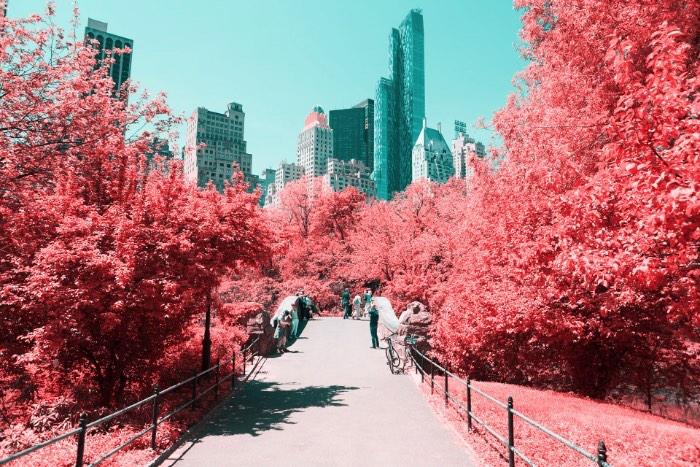 Fotografia Infravermelha de Nova Iorque por Paolo Pettigiani - Foi isso que Paolo Pettigiani fez nesse série de fotografias do Central Park em Nova Iorque. Ele usou de um filtro especial na frente das suas lentes para bloquear a luz visível e deixar apenas os outros espectros de luz visíveis. Dessa forma, as fotos que ele fez desse parque acabam mostrando plantas de um jeito bem estranho mas, o resto da paisagem, continua da mesma forma. Tijolos, água, asfalto e outras superfícies continuam iguais e todas as plantas estão vermelhas. Algo bem onírico, no meu ponto de vista.
