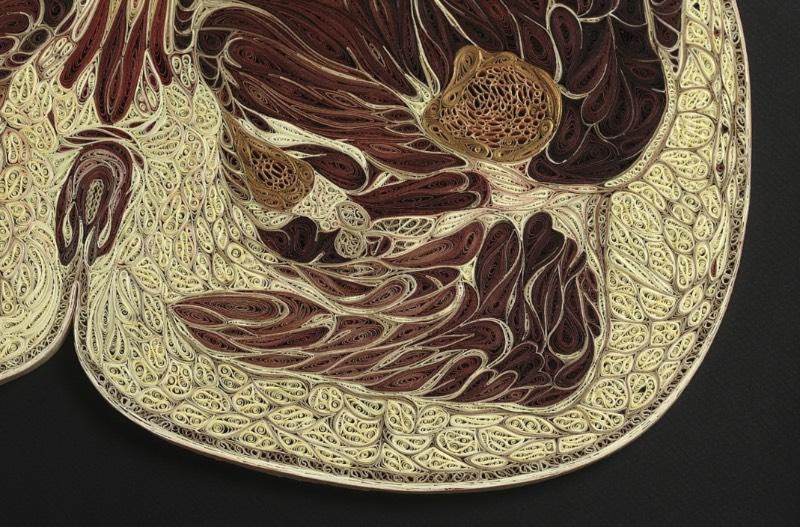 As peças que compõe a série que Lisa Nilsson resolveu chamar de Tissue Series são feitas de um papel japonês e tem suas laterais cobertas de um material dourado, como era feito em livros antigos. E essas esculturas anatômicas são produzidas através de técnicas de rolagem de papel cujo os quais eu não tenho a mínima idéia de como podem funcionar.