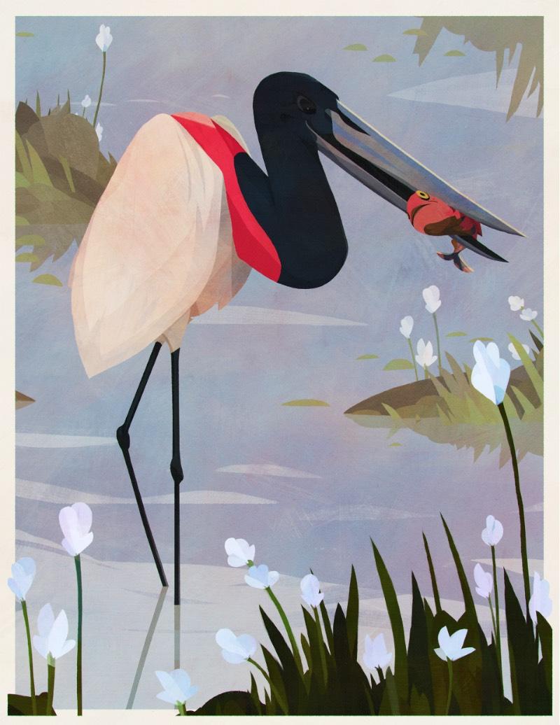 Os Pássaros do Brasil por Eric Pautz — Pássaros do Brasil é um projeto ilustrado celebrando a incrível fauna brasileira. Afinal, o Brasil tem mais de 1.800 espécies diferentes e confirmadas, fazendo do país um dos ecossistemas mais ricos quando se trata de aves.