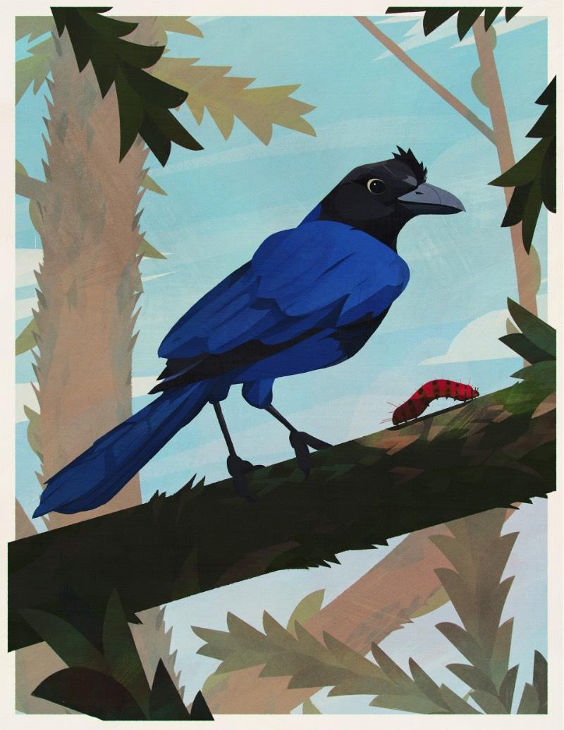 Os Pássaros do Brasil por Eric Pautz — Pássaros do Brasil é um projeto ilustrado celebrando a incrível fauna brasileira. Afinal, o Brasil tem mais de 1.800 espécies diferentes e confirmadas, fazendo do país um dos ecossistemas mais ricos quando se trata de aves. Essa série de ilustrações mostra 27 pássaros para cada um dos estados brasileiros e, logo abaixo, você pode ver os primeiros cinco pássaros que foram ilustrados por Eric Pautz.