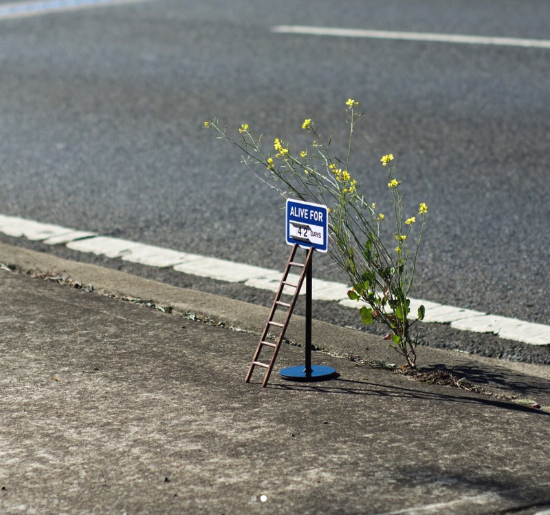 O que muitas pessoas acabariam ignorando pelas ruas, acaba se tornando parte da estranha arte de rua de Michael Pederson. Algumas vezes ele usa de pedaços de grama, outras vezes de uma televisão quebrada abandonada nas ruas. Mas, ele sempre cria algo interessante.