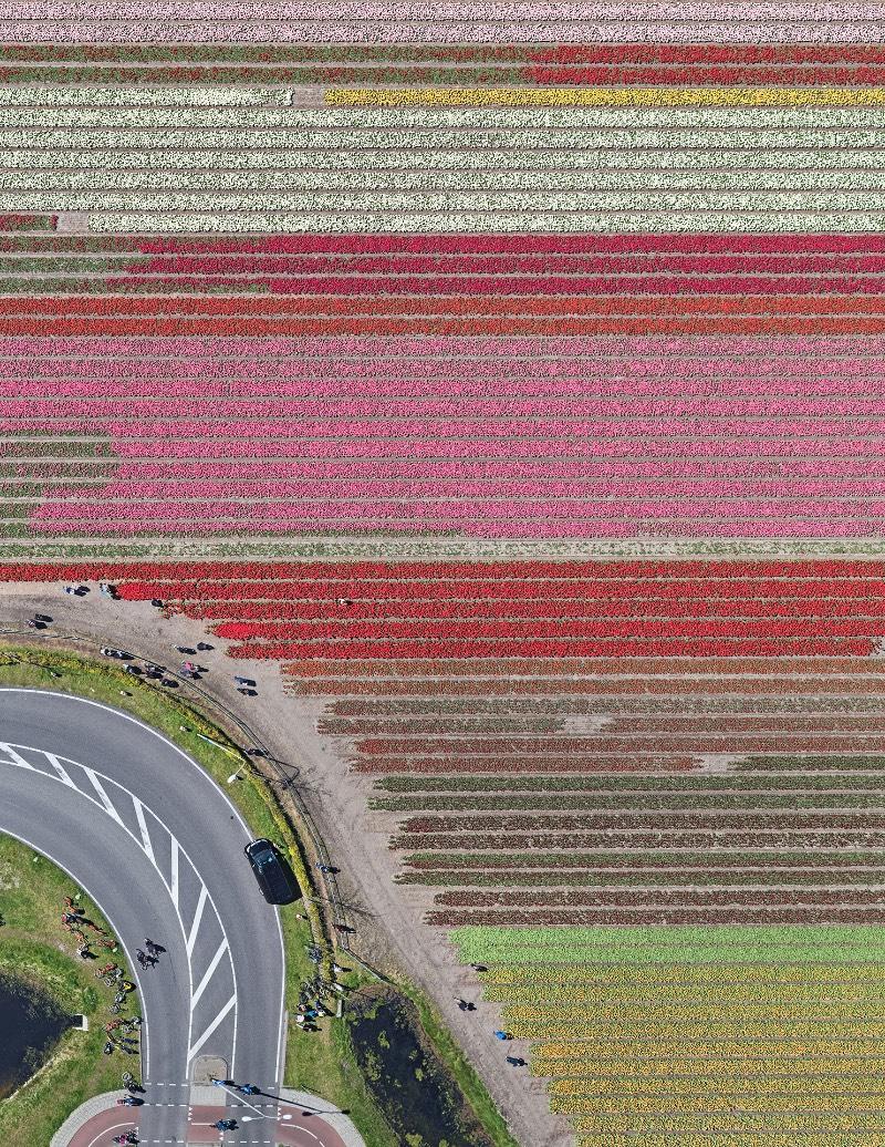 Os campos de tulipas da Holanda nunca apareceram tão bonitos quanto nas fotos aéreas de Bernhard Lang. Elas acabam se tornando uma espécie de antídoto visual as pinturas de Monet e as flores pintadas por Van Gogh. As fotografias aqui mostram um mundo diferente, algo mais geométrico que lembram mais as imagens criadas por Piet Mondrian.
