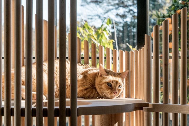 Se você é fã de gatos mas não quer colocar uma cat tree no meio da sua sala que tenha um visual estranho, esse artigo aqui é para você. Afinal, o trabalho do designer Yoh Komiyama em colaboração com o estúdio japonês Rinn criou o NEKO Cat Tree que é, facilmente, a árvore de gatos mais bonita que eu já vi na vida.