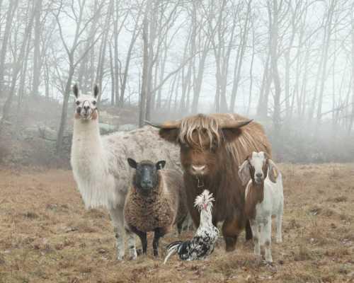 Rob MacInnis e sua fotografia em The Dog & Pony Show via @pristinaorg
