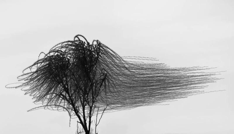 Através de vários anos de fotografia, Xavi Bou tem usado de suas câmeras para documentar através de longas exposições, toda a beleza dos padrões de voos dos pássaros. Esse projeto recebeu o nome de Ornitographies e é lá que você verá as imagens abstratas que são criadas pelos pássaros.